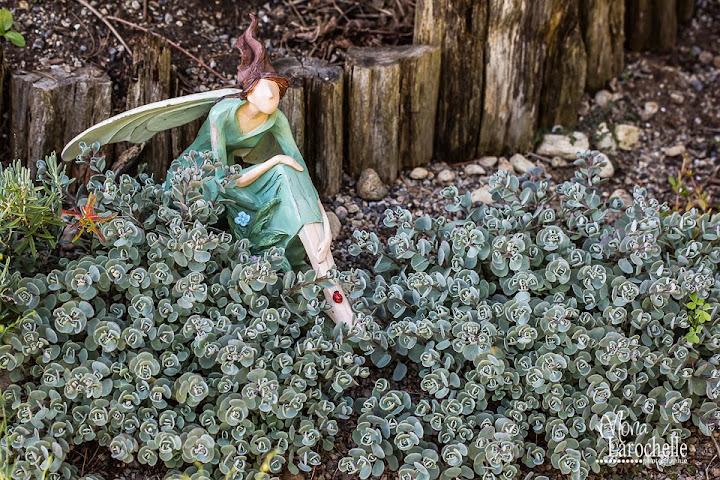 Petits nouveaux au jardin: déco. - Page 7 Deco-jardin-et-sedum-cauticola-140711-159rm