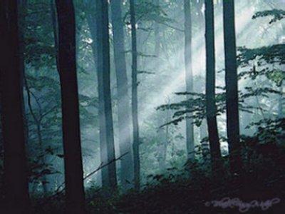 Bosque da Reserva Bosque