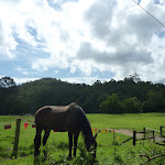 A horse at Hidden Valley (369505)
