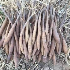 شرکت خدماتی زراعتی کشت هینگ یا آنغوزه شمال زمین   Facebook