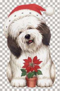pfl_christmas_dog.jpg