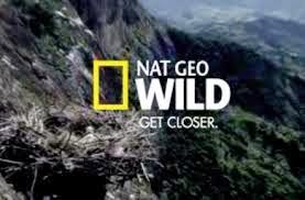 ver national geographic wild en vivo online gratis en directo las 24 horas aqui
