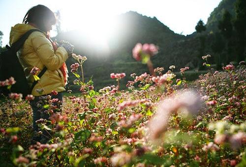 kham pha ban do hoa tam giac mach7 Khám phá bản đồ hoa tam giác mạch