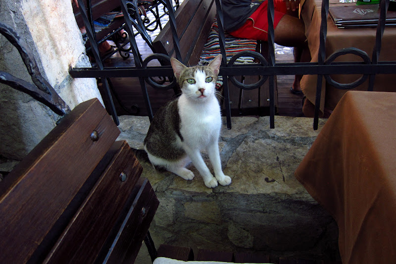 Cat begging at a restaurant