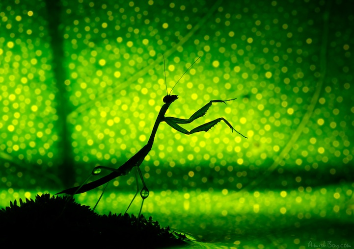 NadavBagim20 Disney Inspired Magical Photos Of Insects