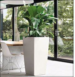 Self-watering contemporary planters by Lechuza