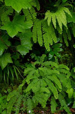 some cool flat ferns