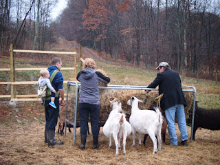 The Guylas feeding the animals