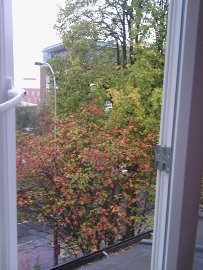 looking down at leaves of red, yellow, and green, through a white-framed window