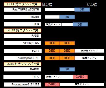 DD,DED,CARDをもつアポトーシス関連分子の構造