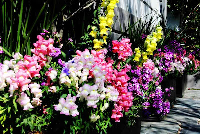Spring Flowers in Charleston by SweeterThanSweets
