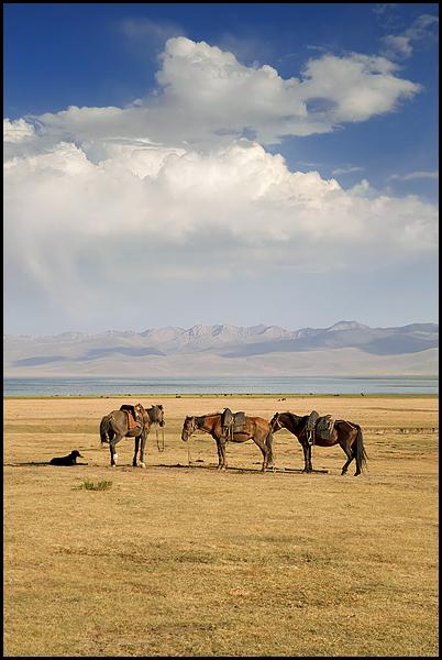 Kirghizstan : des steppes aux Monts Célestes [MAJ 16/09] DSC_0050%2520raw-594%252Bcadre