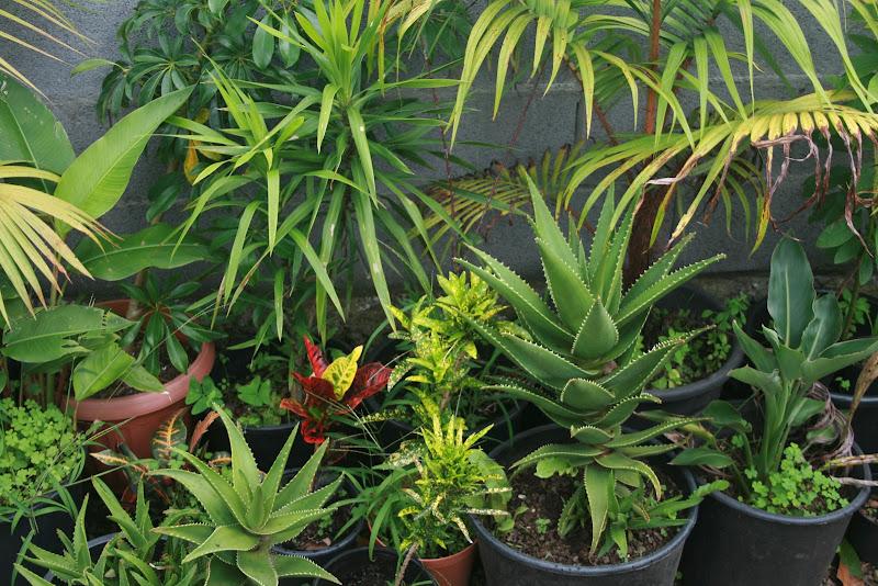 Futur jardin d'orchidées!!! IMG_3538