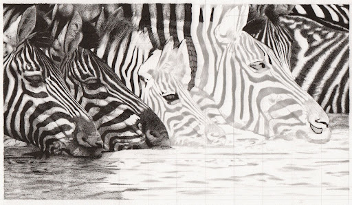 zebras-2014-12-11-10-43.jpg
