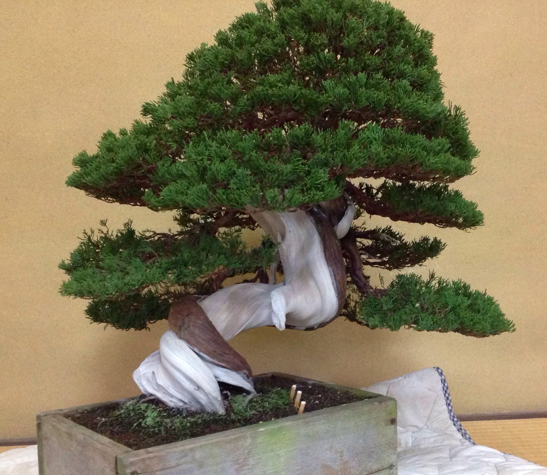 Saruyama Blog April 2014