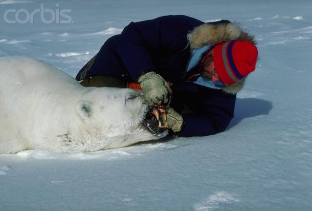 Urso pardo vs Urso polar Corbis-DG004478