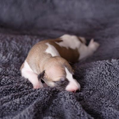 8 days old - Mini Moe (girl #1)