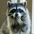 lynda y avatar image