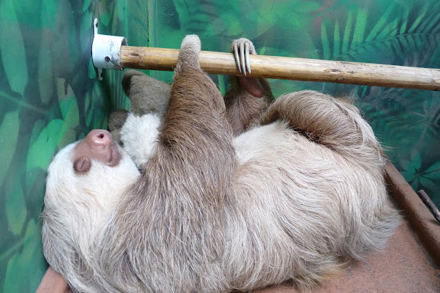 I know, any excuse for a sloth picture. I can make it relevant!