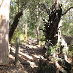 Walking between two old trees (233370)