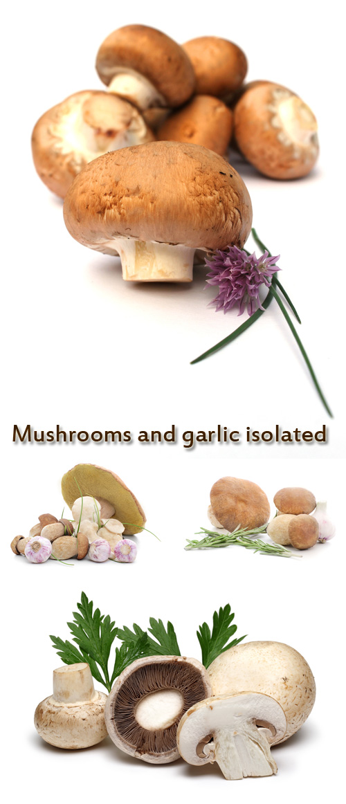 Stock Photo: Mushrooms and garlic isolated