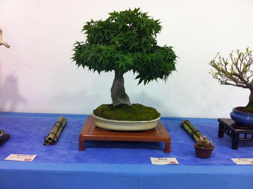 Exposición en Benalmadena IMG_0491