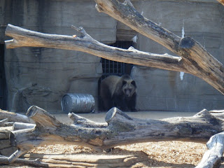 Tulsa Zoo ~ Bear
