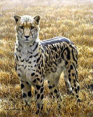bateman_sappi_king_cheetah.jpg