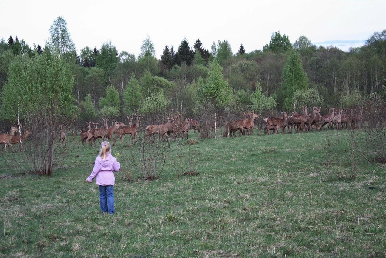 Первые шаги чтобы стать оленеводом