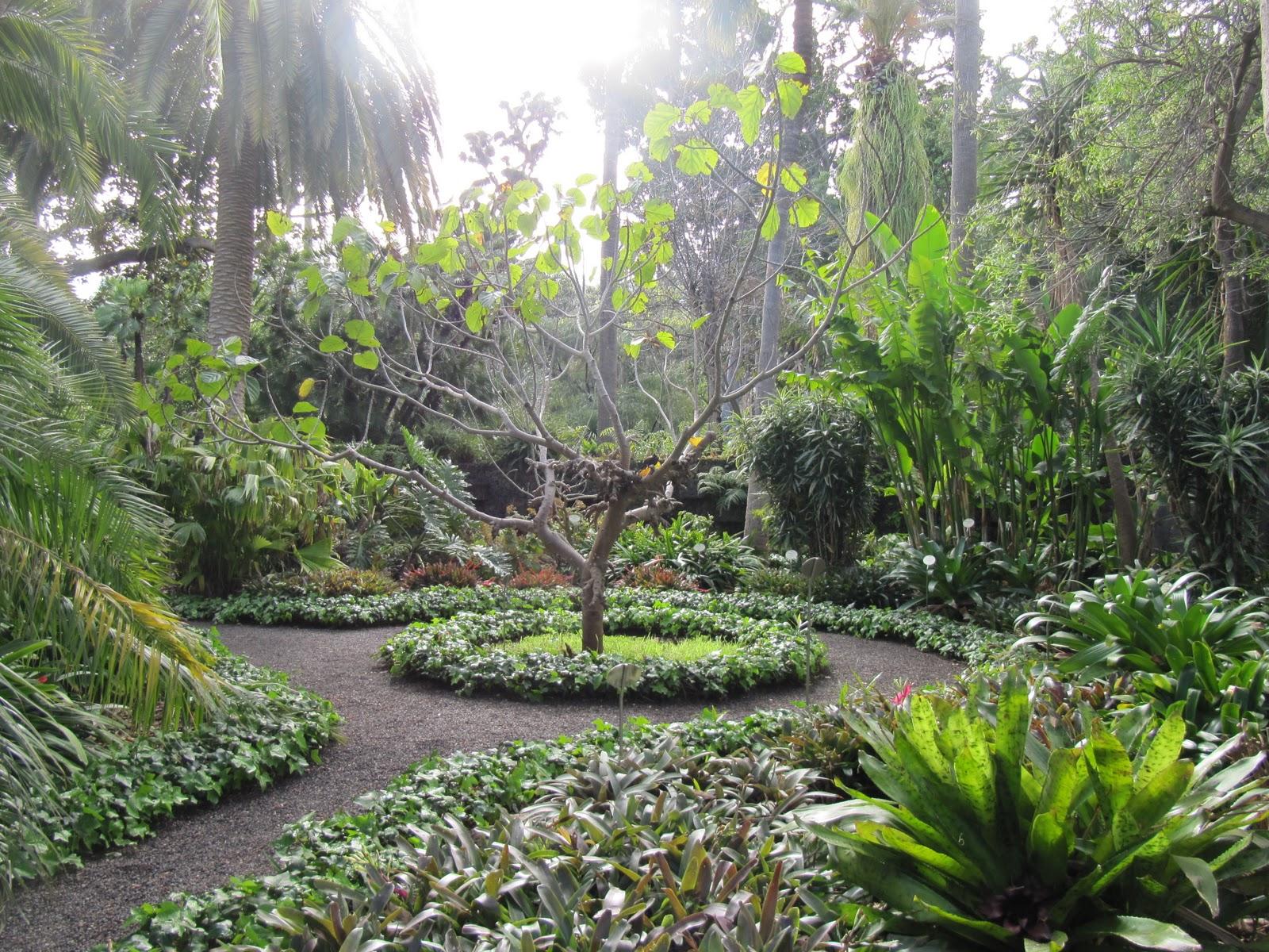El mundo tras mi c mara jardin bot nico tenerife for Jardines tenerife