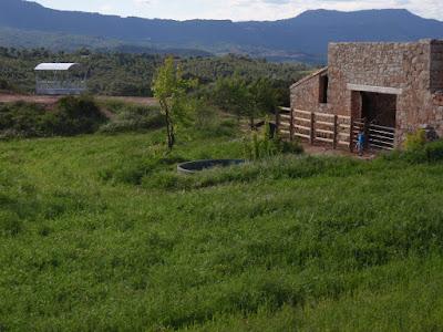 pastures casa vacances a Montserrat