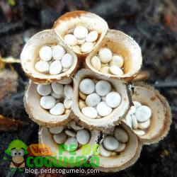 Curar uns remédios de gente de pernas de fungo