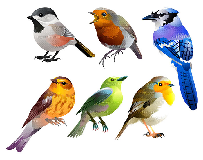 bird vector graphic illustration set