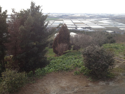 View of trees and greenhouses from a mountain
