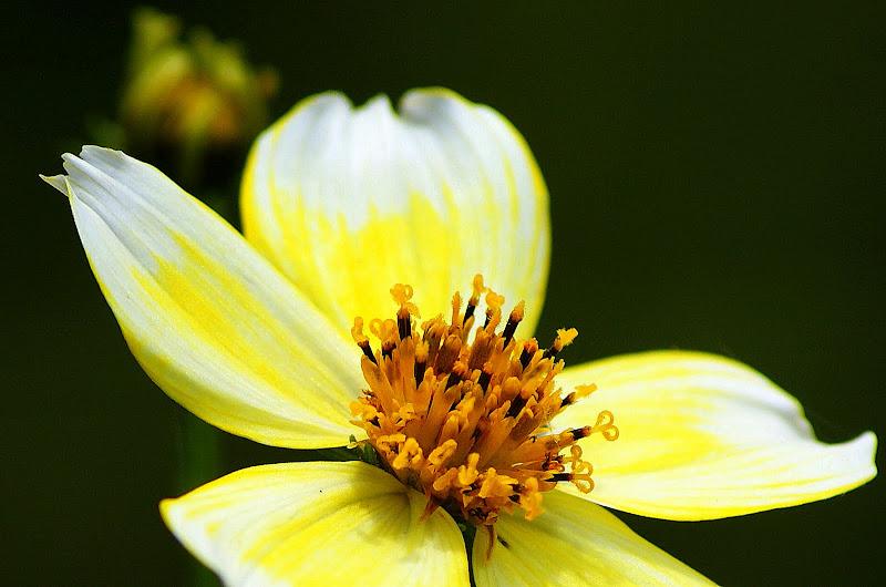 Detalhes de uma pequena flor