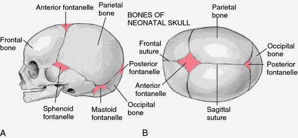 囟門(Fontanelle) - 小小整理網站Smallcollation