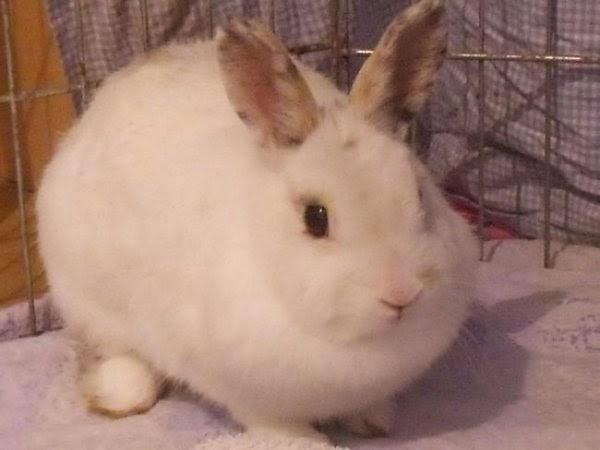 Mirana, lapine blanche-[adoptée] Mirana-98302