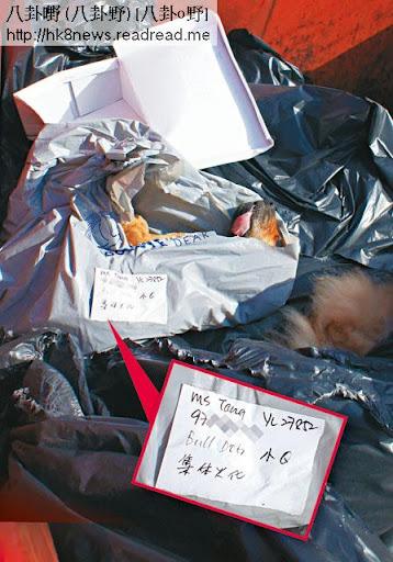 收集站的大型垃圾箱堆滿等候送往堆填區的動物屍體,當中有十多袋是「再見寵兒」(英文名: Goodbye Dear)的包裝,其中一個是包著小 Q的屍體,上面便條寫明主人名字及聯絡,要求服務是「集體火化」。