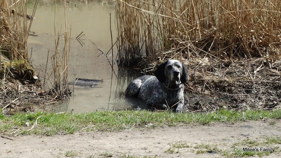 Balades canines en Nord (59)/Pas de Calais (62) - Boulogne-sur-Mer, Calais et Lille - Page 4 DSC01925