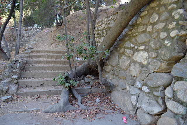 tree in the cement steps