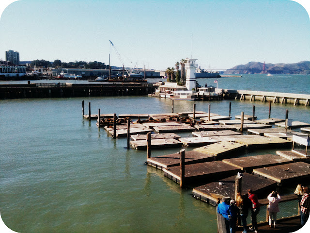 Pier Sea Lions San Francisco Pier36 Pier 36 SF Fisherman's Warf