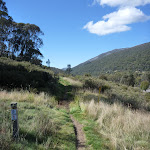 Walking along Bridle Trail Loop (277982)