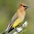 Carmela Griswold avatar image