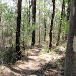 The dry scrub along Warri Warri Track (235946)