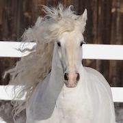 к чему снится белая лошадь?
