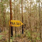 Old yellow sign near Abbotts Falls in the Watagans (321125)