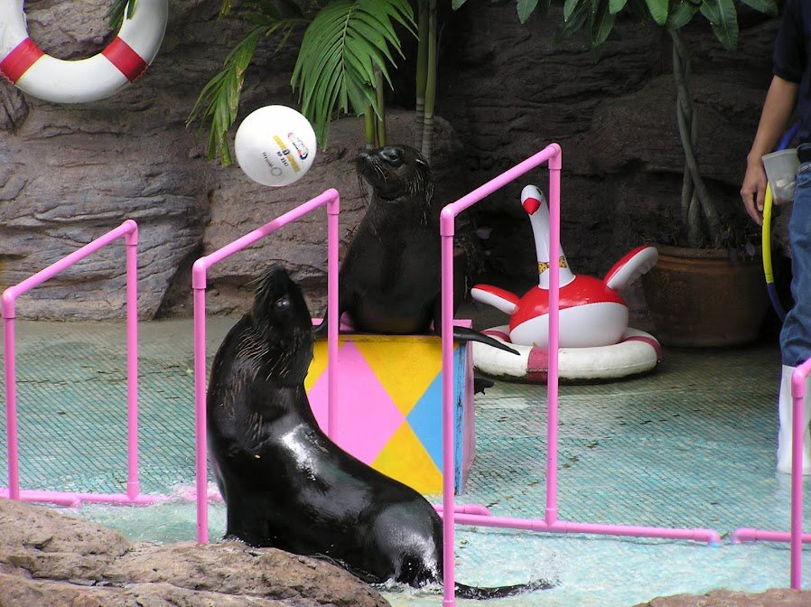 แมวน้ำ, สวนสัตว์โคราช, สวนสัตว์นครราชสีมา