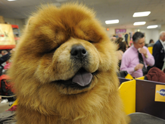 World's most outrageously expensive dogs 2