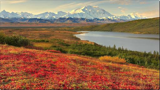 Colorful Bearberry Grows Along Reflection Lake, Denali National Park, Alaska.jpg