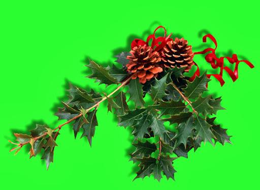 jcc-HolidaySpray-10-05.jpg